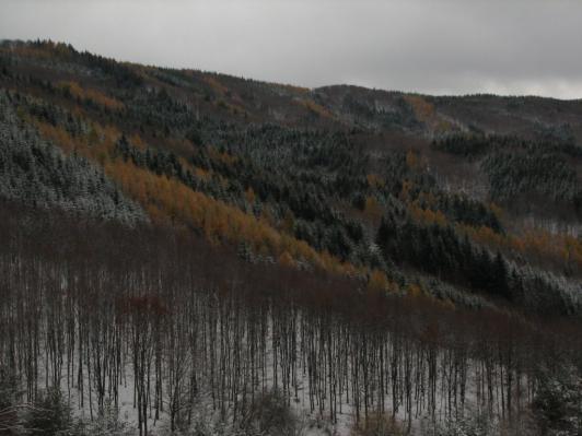 Strážovské vrchy - Lesy v okolí rezervácie