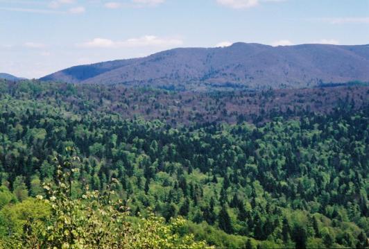 Pestrý les z diaľky