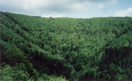Pohľad na Vlčiu v doline Jarabinčík